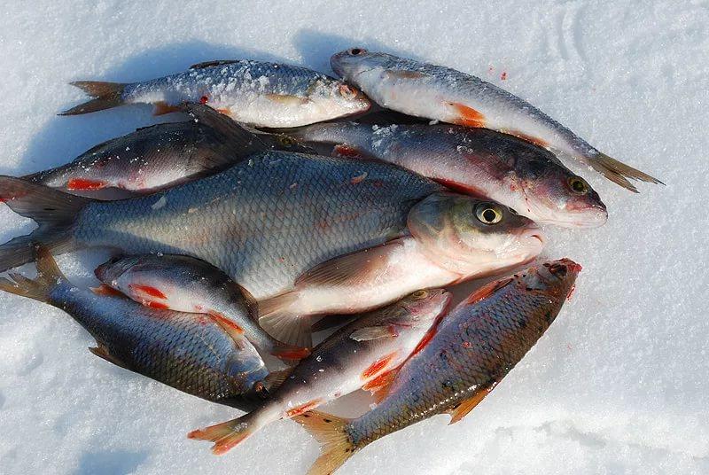 Зимняя рыбалка - лещ плотва
