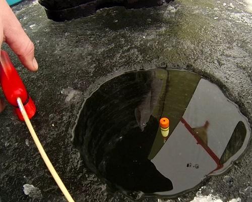 Ловля плотвы зимой на поплавочную удочку