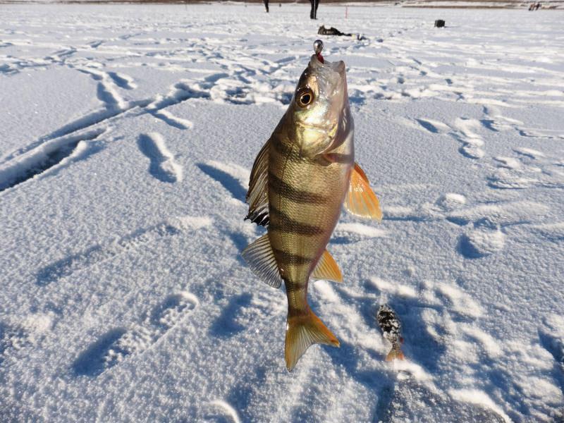 Рыбалка в марте: кого, на что и как ловить