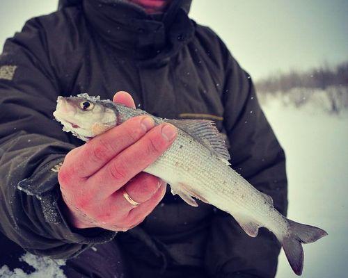 Ловля хариуса весной на реках Полярного Урала