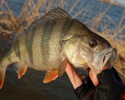 Клев рыбы: лучшие приманки для клева рыбы зимой и летом