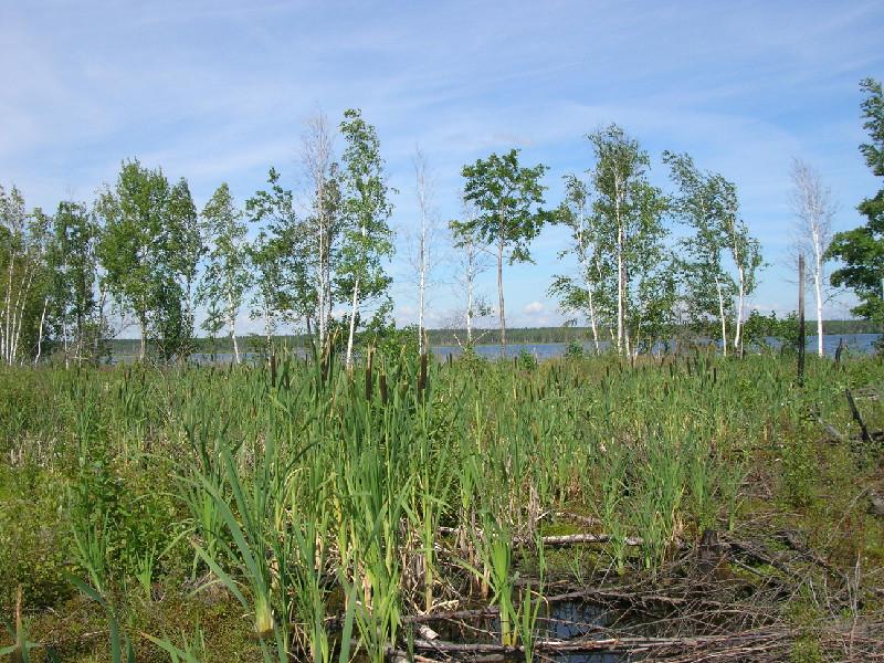 Чёрное озеро (Рязанская область)