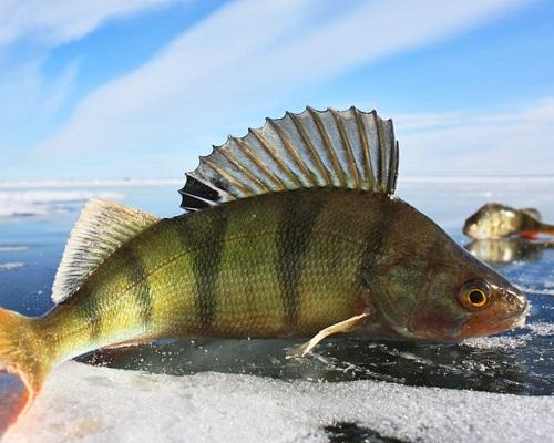 Календарь рыболова на декабрь 2017