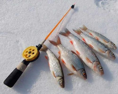 Ловля голавля зимой: со льда и по открытой воде