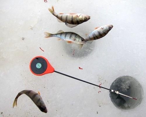 Ловля на мормышку с мотылем: как насаживать мотыля, игра мормышкой