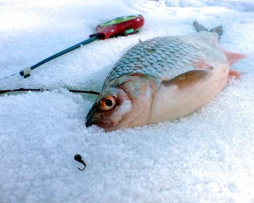 Ловля плотвы зимой: зимняя ловля плотвы со льда