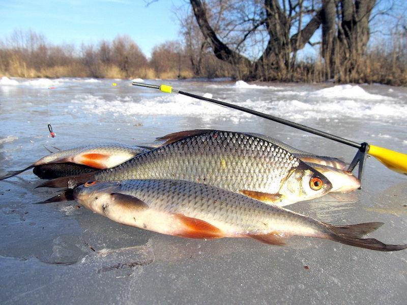 Ловля плотвы зимой: рыбалка на плотву в глухозимье