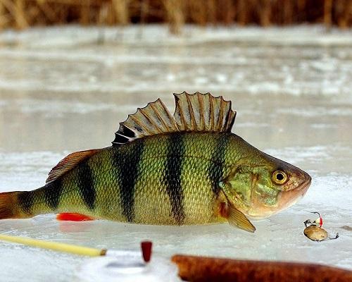 Рыбный день: что надо учесть, отправляясь на зимнюю рыбалку