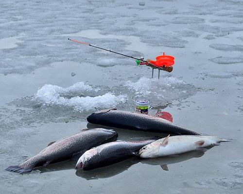Секреты зимней рыбалки на форель