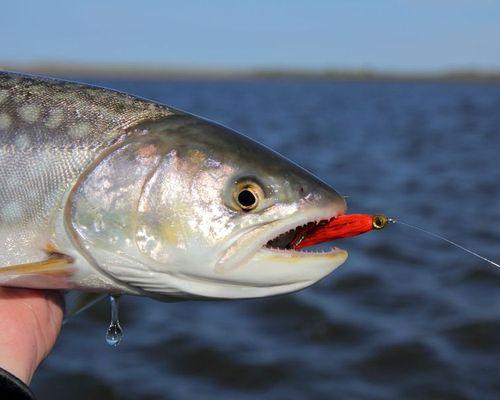 Рыбалка на Cахалинских раскатах