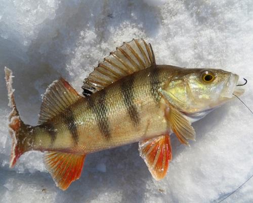 Календарь рыболова — январь 2018: календарь клева рыбы в январе, лунный календарь на январь 2018