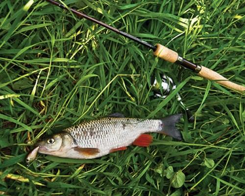 Ловля голавля в сентябре: Как поймать голавля, снасти и наживки для ловли голавля осенью