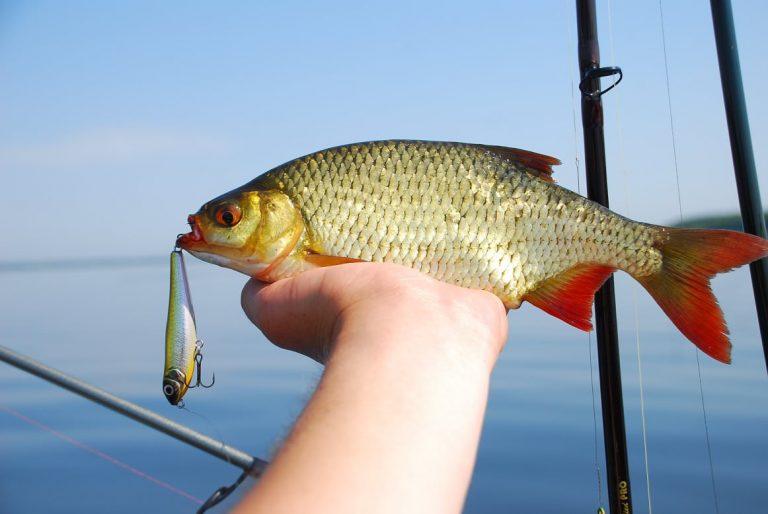 байкал рыбалка осень