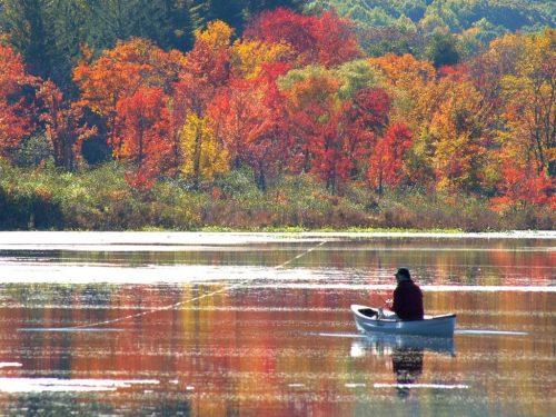 Ловля краснопёрки осенью