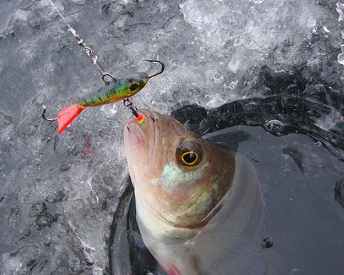 Ловля окуня на балансир по первому льду зимой видео
