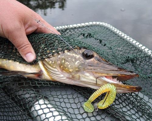 Ловля щуки на озере: как поймать зубастую бестию?