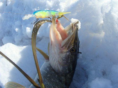 Ловля щуки в феврале