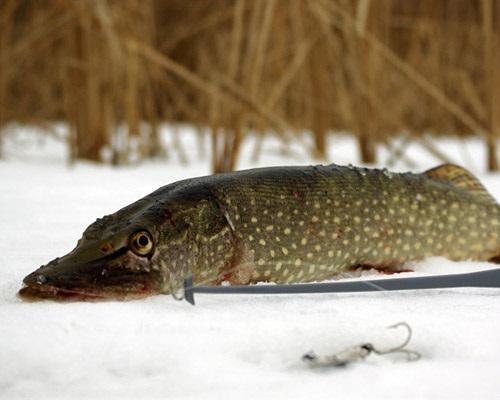 Зимние блесны на щуку: Лучшие блесны для ловли щуки зимой