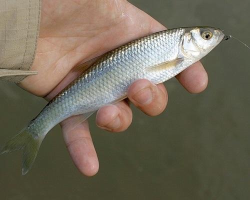 Ловля ельца - читайте на Сatcher.fish