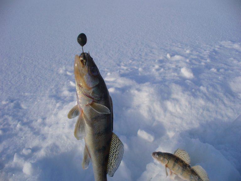 Ловля берша зимой на горе море