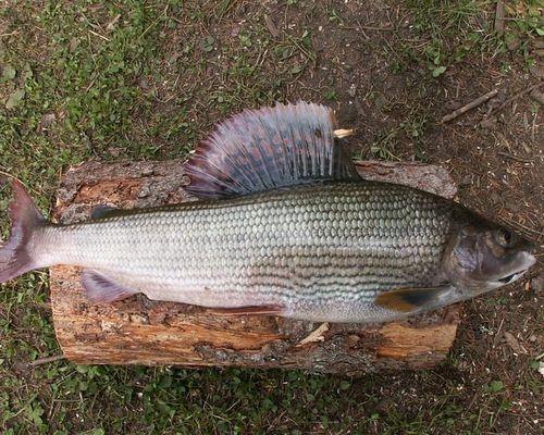 Рыболовный тур на реке Манья