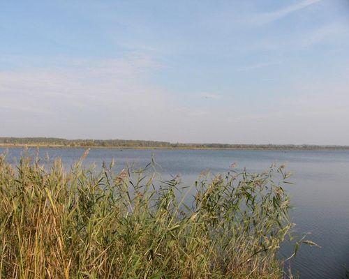 Моховое озеро (Липецкая область)