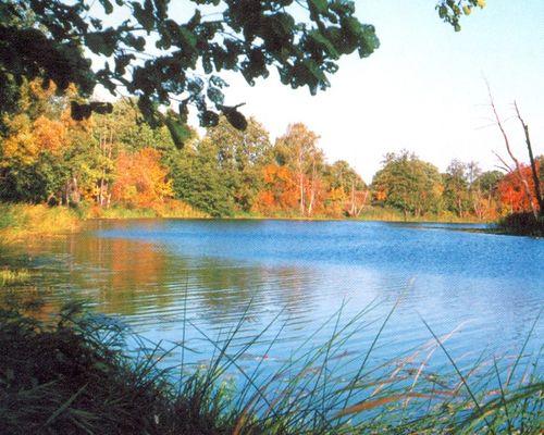 Кривое озеро (Липецкая область)