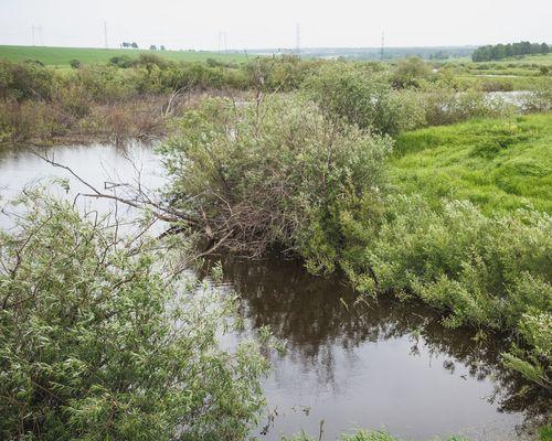 Платный пруд возле Мамаевки