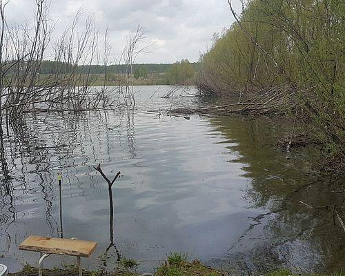 Пруд № 6 по реке Сынок (ООО «Тихая Заимка»)