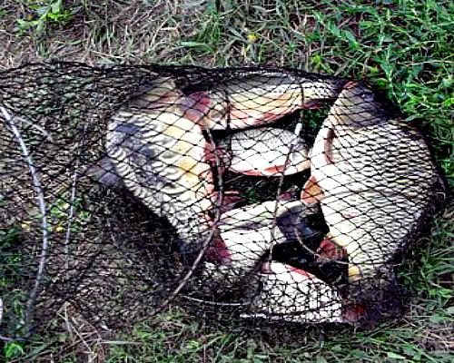 Ловля рыбы на снасть кольцо