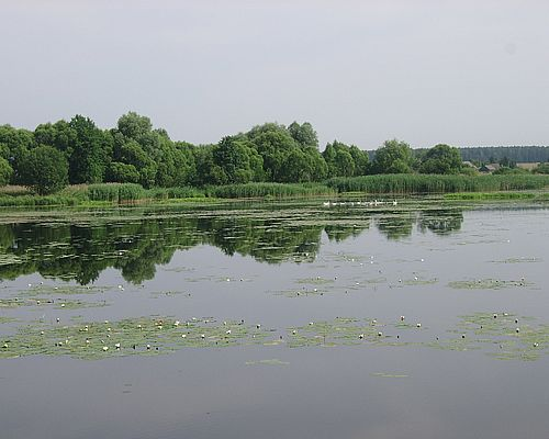 Волковка (Брянская область)