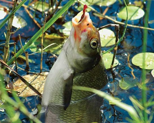 Календарь рыболова — ИЮНЬ 2018: Календарь клева рыбы в июне, лунный календарь на июнь 2018