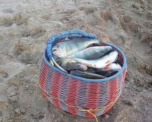 Рыбалка и отдых на «березовых островах» с Дмитрием