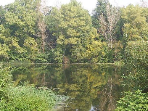 Лесной Тамбов