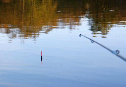 Ловля густеры на поплавочную удочку