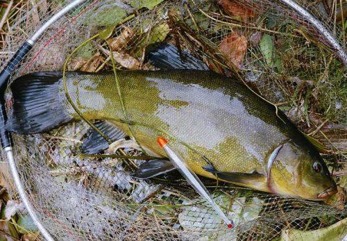 Ловля линя в ноябре на поплавочную удочку