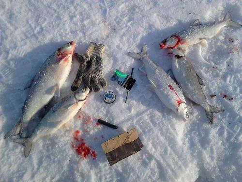 Ловля сига в декабре