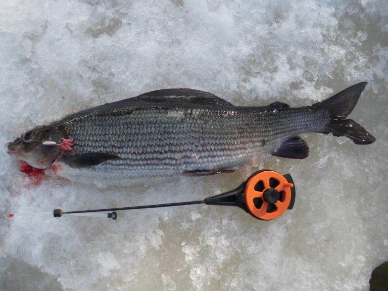 Прикормки для рыбы хариус