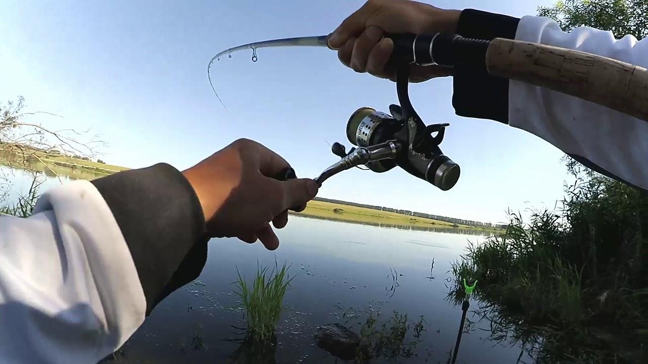 Ловля толстолобика в августе на поплавочную удочку